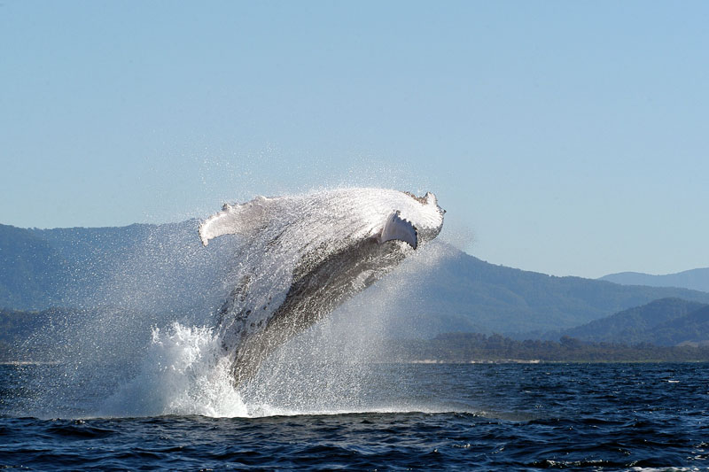 Top 10 Destinations To Witness Giants Of The Ocean - Cruisin Motorhome Rentals Australia