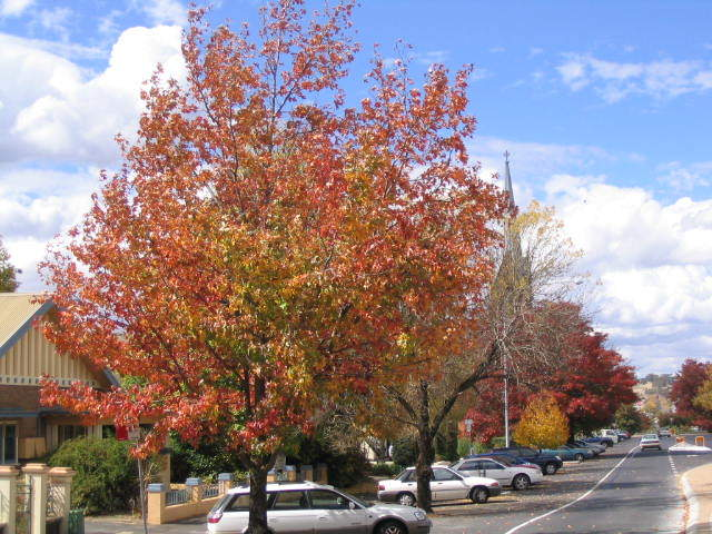 10 Australian Destinations To Visit In Autumn - Cruisin Motorhome Rentals Australia