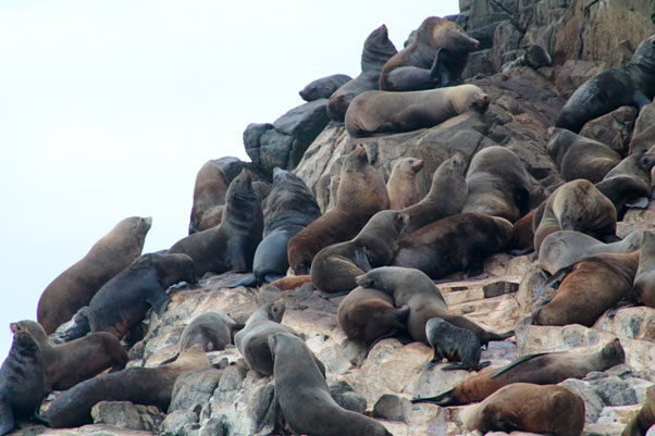 Bruny Island Cruise, Pennicott Wilderness Journeys